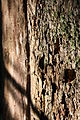 Late Evening Sun Hitting Tree Bark.JPG