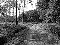 Leśna droga - panoramio (5).jpg