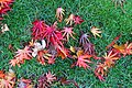 Leaves on grass - Oregon Garden - Silverton, Oregon - DSC00186.jpg