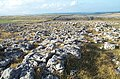 Limestone Pavement, Great Asby Scar - geograph.org.uk - 444942.jpg