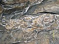 Limestone breccia & gypsum wedging (Ste. Genevieve Limestone, Middle Mississippian; Rose's Pass, Mammoth Cave, Kentucky, USA) 3 (38023937362).jpg