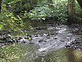 Little Dart River near Chawleigh - August 2011 - panoramio.jpg