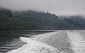 Lochmara Bay, Marlborough, New Zealand, 11 May 2011 - Flickr - PhillipC.jpg