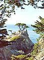 Lone Cypress ~1994.jpeg