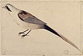Long-Tailed Bird Seen in Profile. MET 80.3.201.jpg