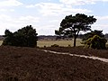 Long Slade Bottom from Hincheslea Moor, New Forest - geograph.org.uk - 146154.jpg