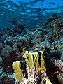 Looking up the reef - take 3 (6158467391).jpg