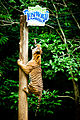 Lost World Tiger Valley 2.jpg