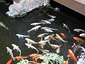 Losts of fish Loro Parque.JPG