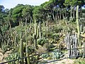 MARiMUTRA 008 - Cactus 4 - panoramio.jpg