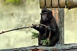 """Macaque """"Newquay Zoo"""" Cornwall (16709680956).jpg"""