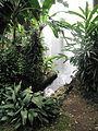 Madeira em Abril de 2011 IMG 1714 (5663742596).jpg