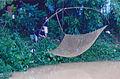 Man gets his net in Vietnam.jpg