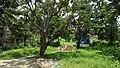 Manasa Mound Area - South-western View - Manasapota - Simurali - Nadia 20170730115617.jpg
