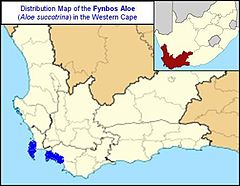 Map of Aloe Succotrina - Fynbos Aloe SA.jpg