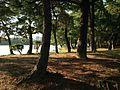 Matsushima Island in Ohori Park 4.JPG