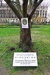 Memorial Tree to the Victims of the Hiroshima Bomb.jpg