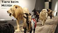 Militärhistorisches Museum in Dresden 1