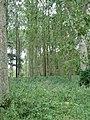 Mill Carr - geograph.org.uk - 544180.jpg