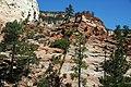 Minor faults in Navajo Sandstone (Lower Jurassic), Clear Creek Valley, White Cliffs, Zion National Park, sw Utah 1.jpg