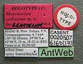 Monomorium xuthosoma casent0020507 label 1.jpg