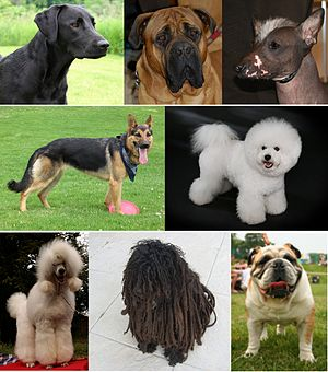 Montage of dogs.jpg
