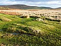Moorland east of Llanbedr Hill - geograph.org.uk - 685067.jpg