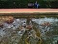 More ducks! (3305791465).jpg