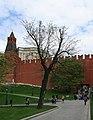 Moscow OaksAlexandovskyGarden 2150.jpg