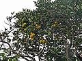 Mosteiros-Oranger (1).jpg