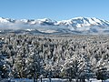 Mountain Range and Forest in Winter, Wallowa-Whitman National Forest (32086552725).jpg