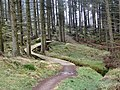 Mountainbiking trail in Kielder forest park - geograph.org.uk - 682841.jpg