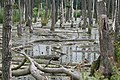 Mueritz Sumpf im Wald 2.JPG