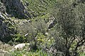 Mycenae (3375428247).jpg
