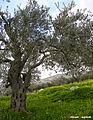 Nablus 4.jpg