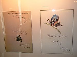 Butterflies drawn by V (Vladimir) for V (Vera).Nabokov House of Saint Petersburg.