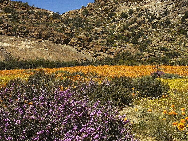 File:Namaqualand, Goegap 1035.jpg