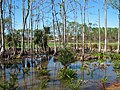 Naples Swamps 01.jpg