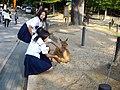 Nara ciervo colegialas.JPG