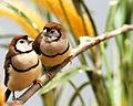 National Aviary (13020192093).jpg