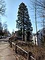 """Naturdenkmal Stuttgart - 1 Mammutbaum """"Steinkopfstr. 6"""".jpg"""