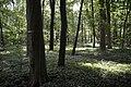 Naturschutzgebiet Haseder Busch - Im Haseder Busch (7).jpg