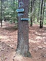 Nehantic Trail and Pachaug Trail eastern fork split.jpg