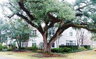 Neill Corporation - Neill Corporation's headquarters offers employees a lush garden environment.