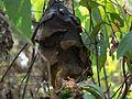 Nest (2115030984).jpg