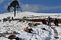 Neva en Ixchiguan San Marcos (8416894508).jpg