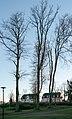 Nizzepark, Ribnitz-Damgarten ( 1070905).jpg