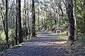Noojee Rail Trail 002.JPG
