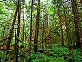 North Cascades National Park (9292777446).jpg