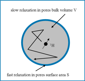 Nuclear magnetic resonance in porous media - Image: Nuclear spin relaxation in porous media
